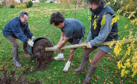 comment planter un arbre en pot comment planter un grand arbre mon jardin ma maison