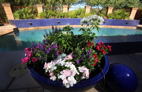 5 Tips For Container Gardening In The Desert Heat