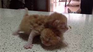 Mama Cat Goes Nuts