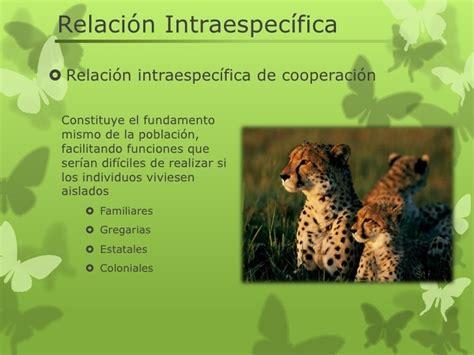 escribe y dibuja en tu cuaderno dos ejemplos de cada tipo de relaciones intraespec 237 fica e