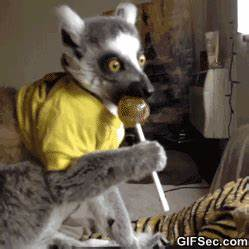 Funny Animals GIF - Find & Share on GIPHY