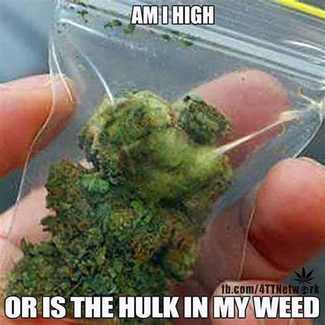 Funny Weed Memes - 10 best weed memes for the week september 27 october 4