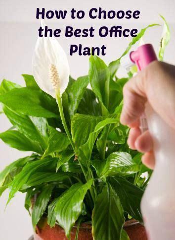 best office desk plants best flowers for office desk ideas greenvirals style