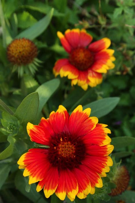 do perennials grow back every year types of flowers to choose for a colorful flower bed homes com