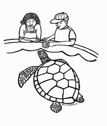 Turtle Coloring Sea Turtles Colouring Cartoon Loggerhead