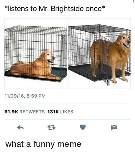 memes  funny meme funny memes
