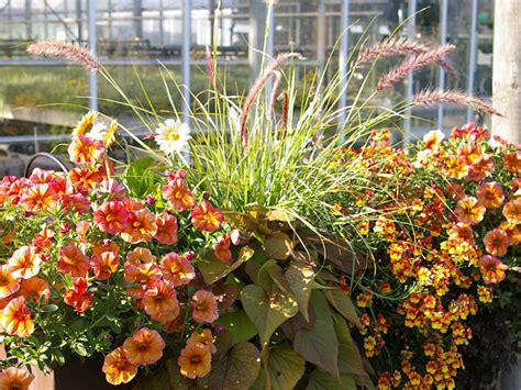 balkon ideen pflanzen sommerliche bakon bepflanzung in orange