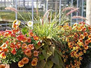 Balkon Ideen Pflanzen : pflanzen f r den balkon in orange ~ Lizthompson.info Haus und Dekorationen