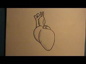 How to Draw a Real Human Heart - YouTube