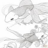 Coloring Fish Adult Betta Animals Golden Printable Ryby Coloriage Kolorowanki Adults Ausmalbilder Goldfisch Super Supercoloring Poisson Pokoloruj Colorir Sheets Ausmalbild sketch template