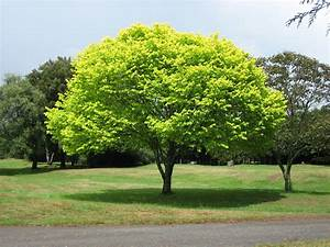 PICTURE WORLD: Beautiful Tree Picture In World