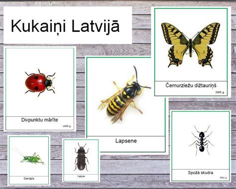 Kukaiņi Latvijā - Mācību materiāli