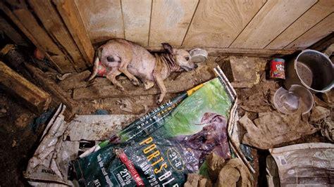 exposing puppy mills  bark