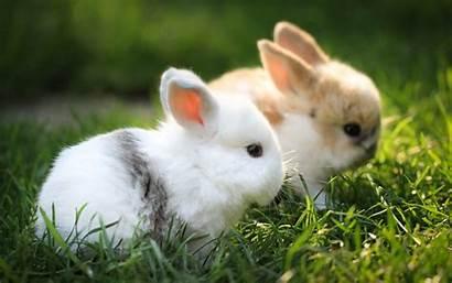 Bunny Wallpapers Rabbit Wallpapertag