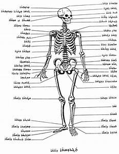 Gabriel Kenoun   U201cmedicine And Human Anatomy U201d And  U201cgeometry