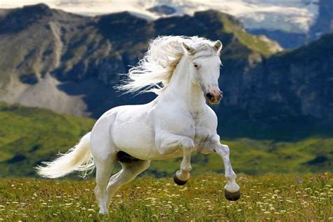 horse does hd long meadow grass mountains deep wallpapers13