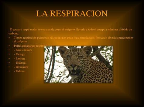 la nutricion del leopardo
