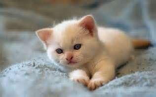 Little Cute Kitten Cat