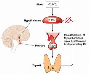 Solutions To The REAL Root Causes of Hypothyroidism ...