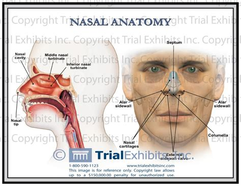 kitchen islands lowes diagram of the sinuses 28 images sinus anatomy human