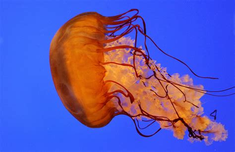 Diapers Made From Jellyfish May Be The Next Big Thing In