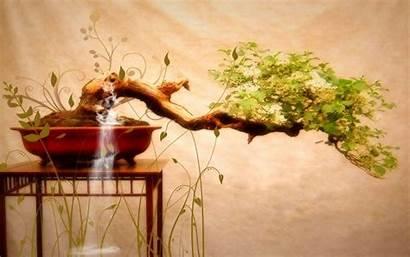 Bonsai Japanese Wallpapers Tree Trees Nature Painting