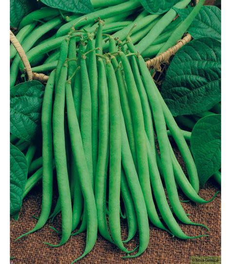 cuisiner les haricots mange tout boites de graines a semer de haricots nain delinel