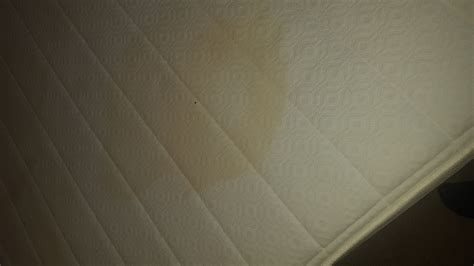 removing stains   mattress dust mite removal
