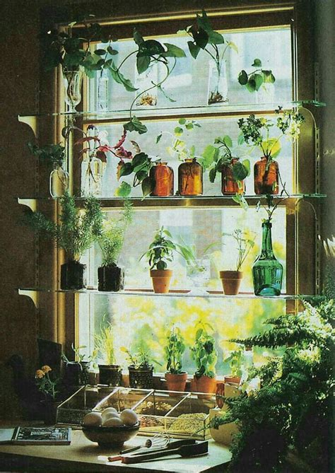 Ideas For Kitchen Plant Shelves by Pin On Indoor Plant Herb And Cactus Displays