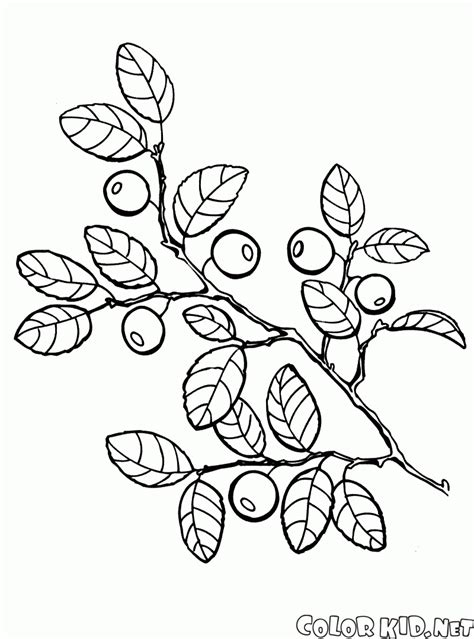 coloring page berries