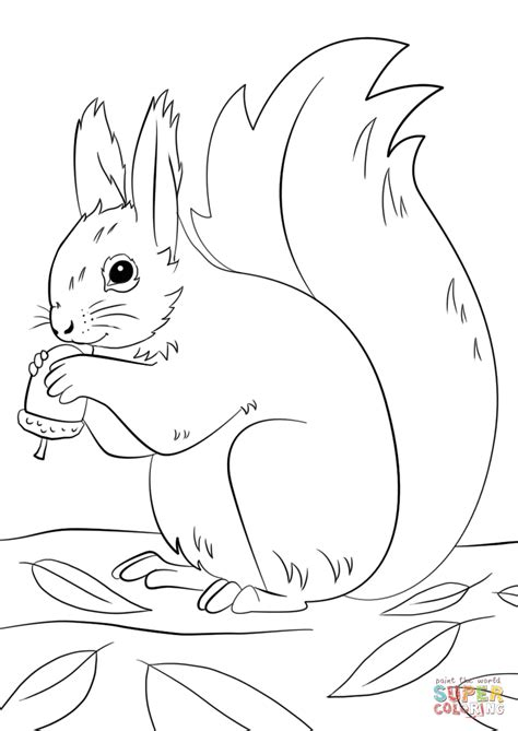 Squirrel Preparing for Winter Super Coloring (With