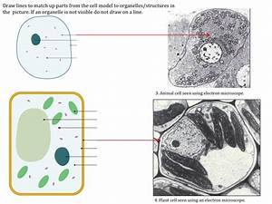 Cell Structure Teaching Resources