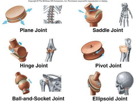 Types Of Synovial Joints And