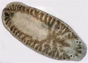 Beyond the Human Eye: Flatworms:Minute Predators of the ...