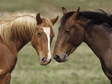 horses animals horse prey discover friends
