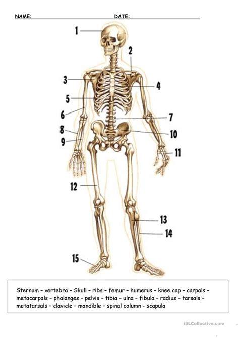 bones worksheet  esl printable worksheets
