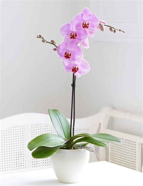 17 meilleures fleurs d orchid 233 es sur orchid 233 es roses orchid 233 es et fleurs insolites