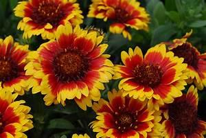 14 Sun Loving Perennials Anyone Can Grow