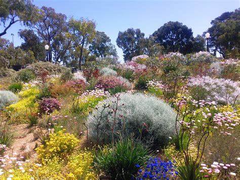 australian native plants  rock gardens   survive