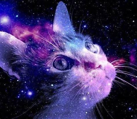 Galaxy Animal Wallpaper - animals backgrounds cats galaxy image