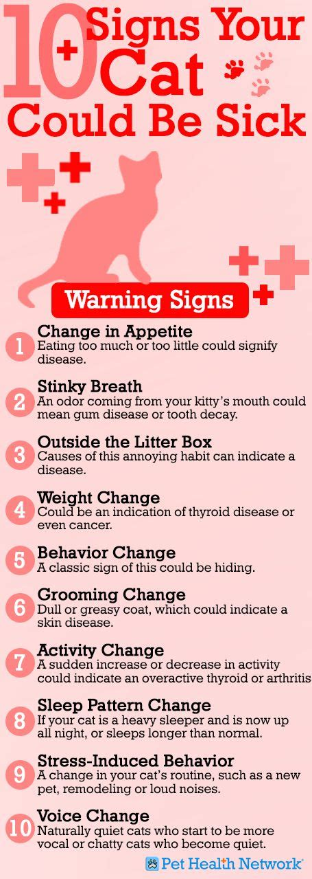 sick cat symptoms 10 warning signs your cat might be sick cat forums