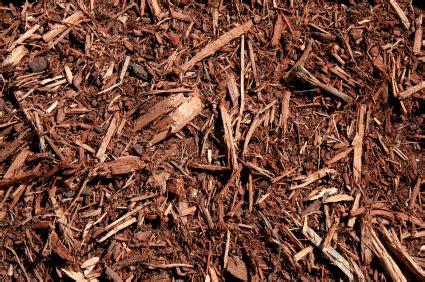 pine bark mulch vs hardwood mulch pine needles vs hard wood mulch lake norman s great debate lake norman real estate