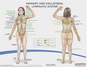 Diagram Of The Lymph Nodes Lymph Nodes In Body Diagram Human Anatomy Diagram