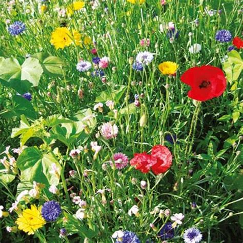 Wildlife Seeds  Cottage Garden Mix  Flowers To Sow In