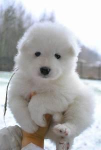 10 Dogs That Look Like Polar Bear Cubs | Rover.com