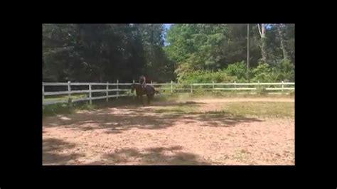 appendix horse quarter