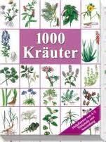 kräuter richtig pflanzen lehrerbibliothek de allgemeinbildung pflanzen seite 2