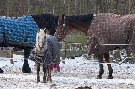 horse winter horses temperature must care blanket haves guide cold weather blankets blanketing ways saddlery dover properly foolproof them core