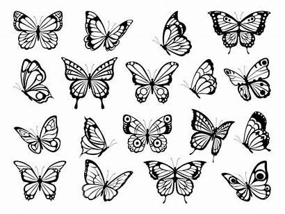 Butterfly Mariposas Butterflies Silhouette Silhouettes Farfalle Tattoo