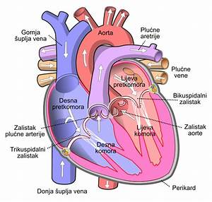 Label Heart Diagram Worksheet
